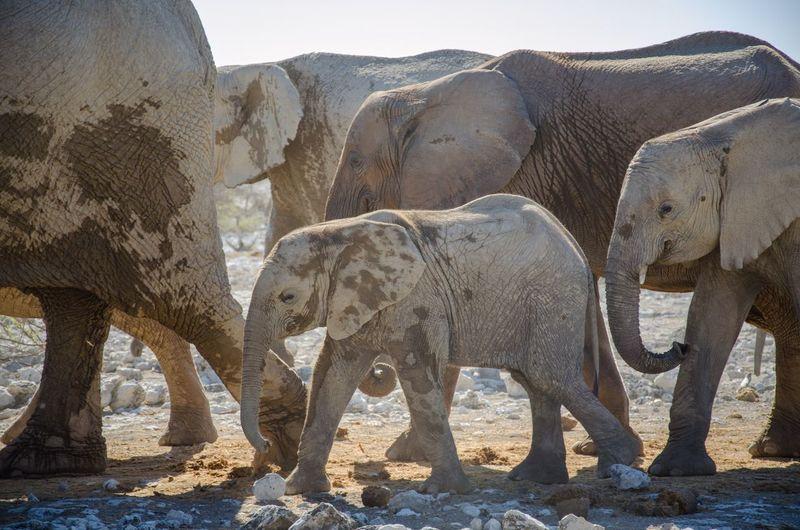 View of elephant