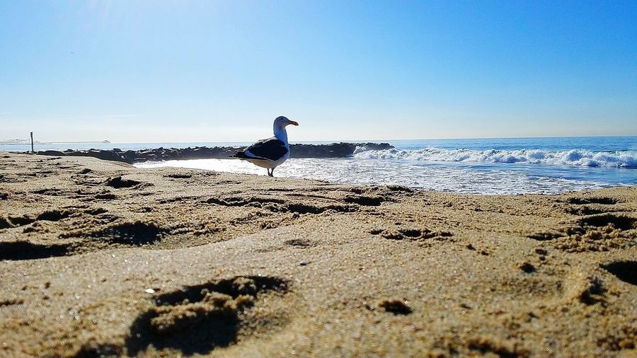 Seagull Oneleft Profile View EyeEm Best Shots Eye4photography  EyeEm Best Edits EyeEm Best Shots - Nature Eyeem2017 One Person Full Length Horizon Over Water Sky Day Leisure Activity