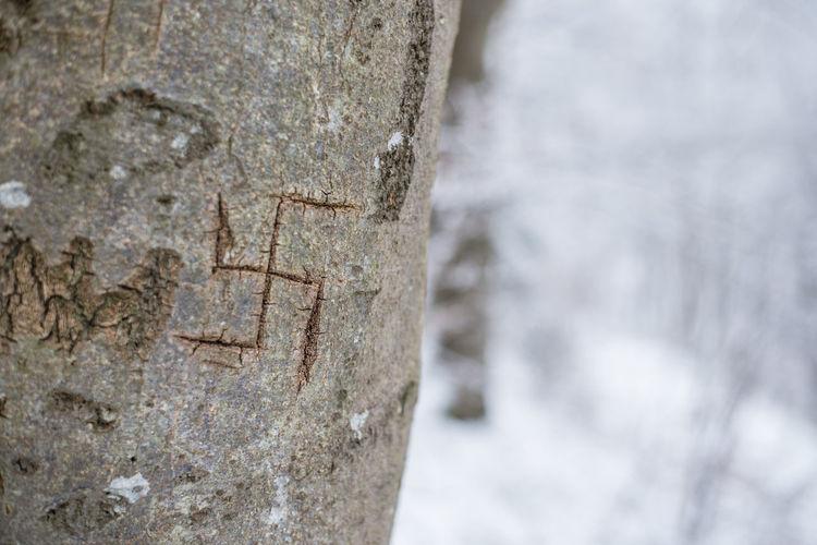 Scratch Antisemitismus Cold Faschismus Faschist Hakenkreuz Hate Heil Hitler Hitler Holocaust Holocaust Nationalsozialisten NAZI NS-Zeit Nsdap Scoring Svastika Symbol Symbolism Tree Tree Trunk Trees Winter