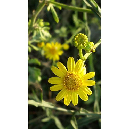 Flowerporn Color Portrait Yellow Flower Autumn
