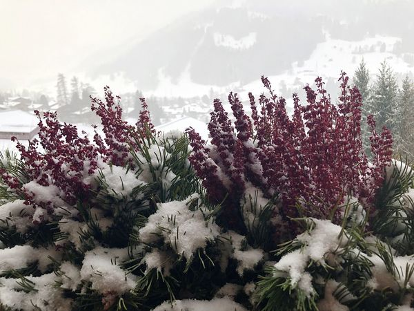 Freshly fallen snow Pretty In Pink Beauty In Nature Bolonie Style I❤️Gstaad Bolonie Art Bolonie Flower Nature Growth Beauty In Nature Freshness No People Plant Fragility Close-up Day Flower Head Sky Outdoors Shades Of Winter