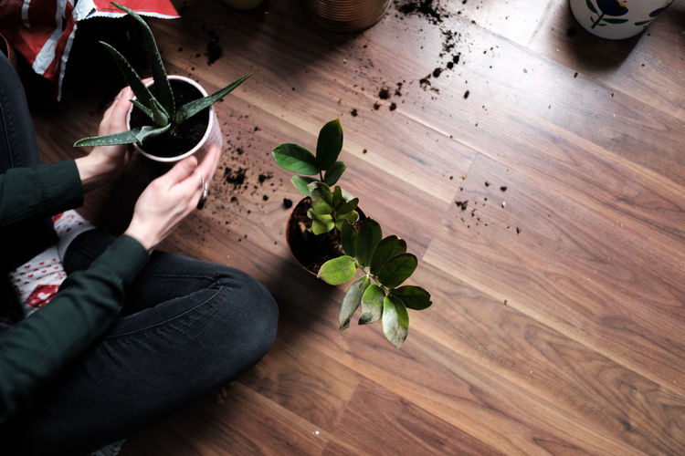 High angle view of potted plant on hardwood floor