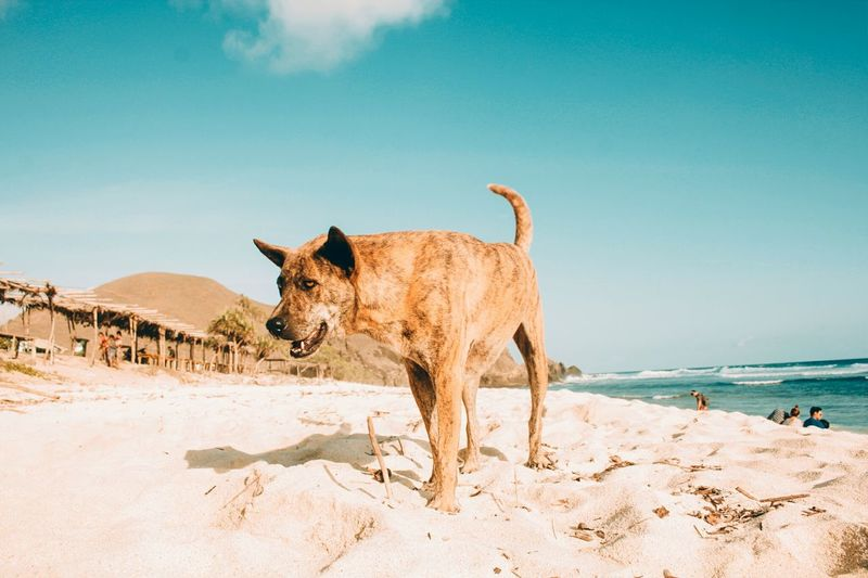 EyeEm Selects Animal Wildlife Sky Nature Animal Sand Outdoors Desert Day Sand Dune Mammal Animals In The Wild No People First Eyeem Photo Nature Folkscenery Folkgood Folk Art  Folkmagazine Folk Art  Folkindonesia Folk Art  Folkcreative Folk Art  Second Acts Fresh On Market 2017