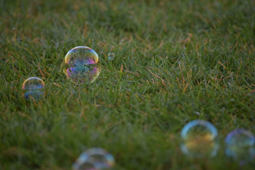 Bubbles at sunrise Beauty In Nature Bubble Bubble Bubble Bubble Bubble Toil And Trouble Bubbles Close-up EyeEm Best Shots Floating Focus On Foreground Fresh On Eyeem  Grass Nature No People Outdoors Photo Photography Photooftheday Play Reflection Reflections Sphere Spheres