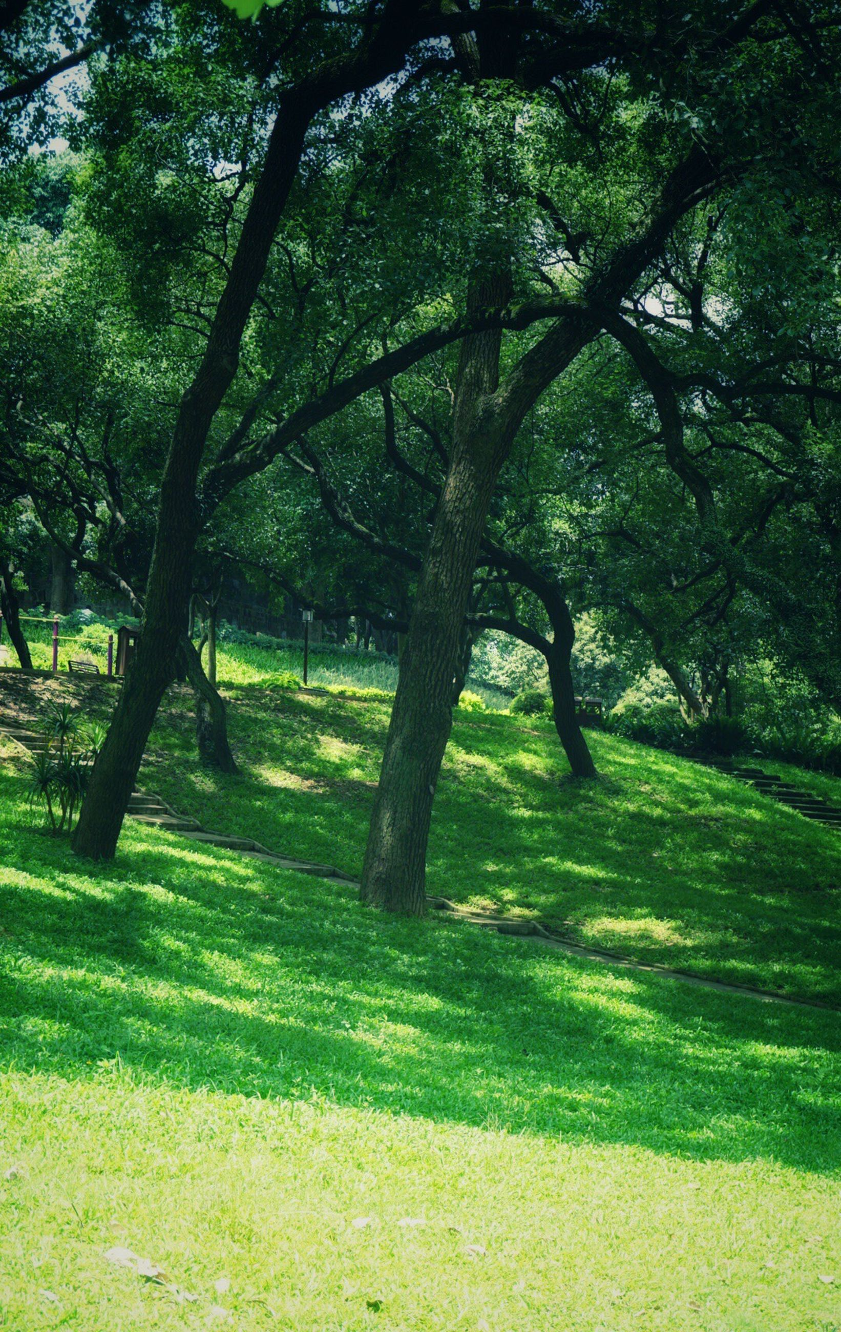 tree, grass, green color, tranquility, growth, tree trunk, tranquil scene, nature, beauty in nature, landscape, field, scenics, grassy, branch, sunlight, shadow, park - man made space, day, forest, outdoors
