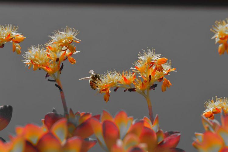 Close-up of orange flowers on plant