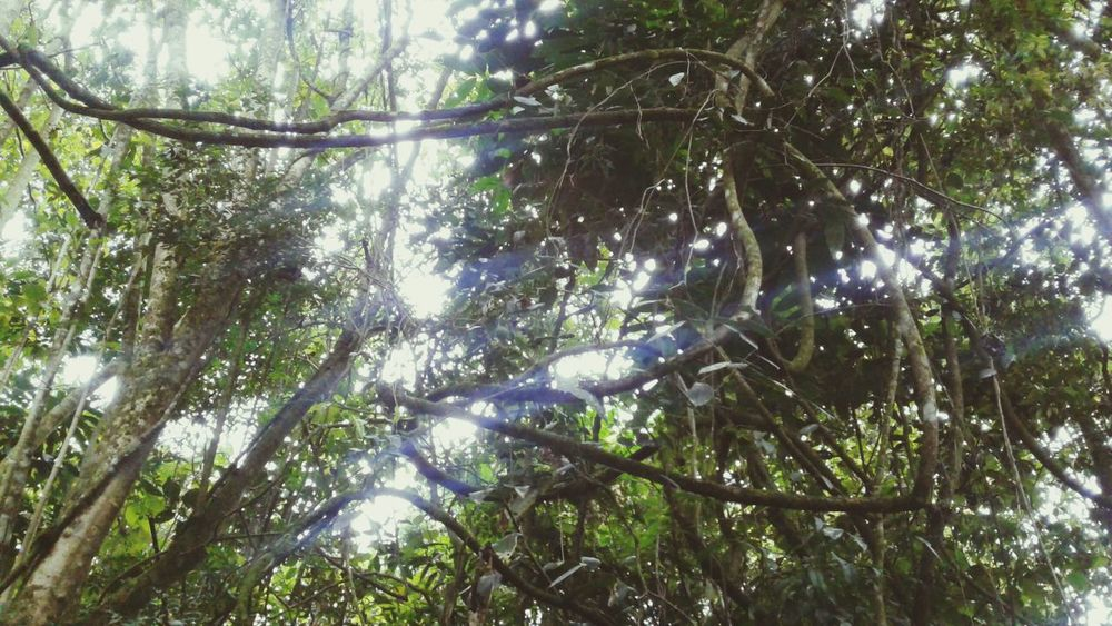 Tree Nature Growth Forest Green Color Tranquility Tangles