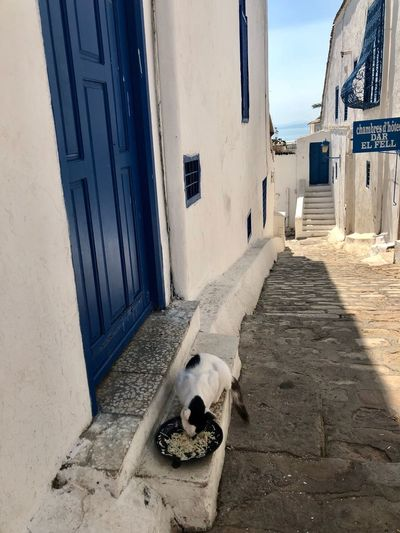 Tunisia Pets
