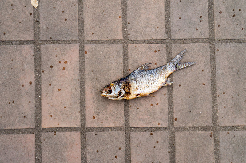 High angle view of dead fish on tiled floor