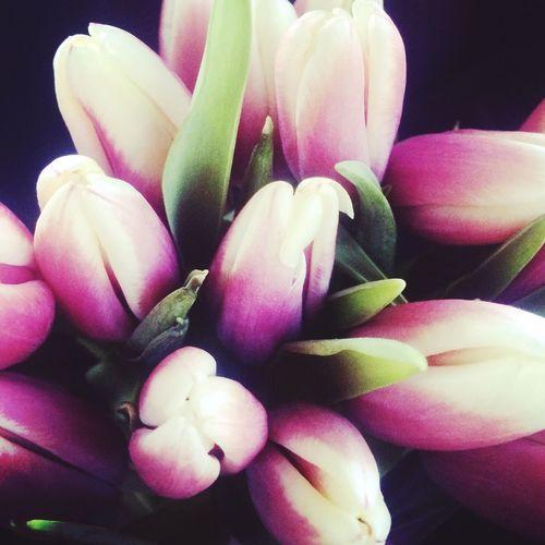 Папаменялюбит ❤️ с_8марта тюльпан 💐💐💐
