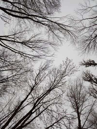 #White Tree Winter Black Black-white #blackandwhite Backgrounds Full Frame Flying Low Angle View Large Group Of Animals Sky Day Outdoors