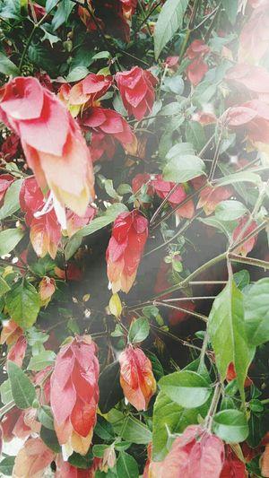 Xalapa Flores Ciudad De Las Flores