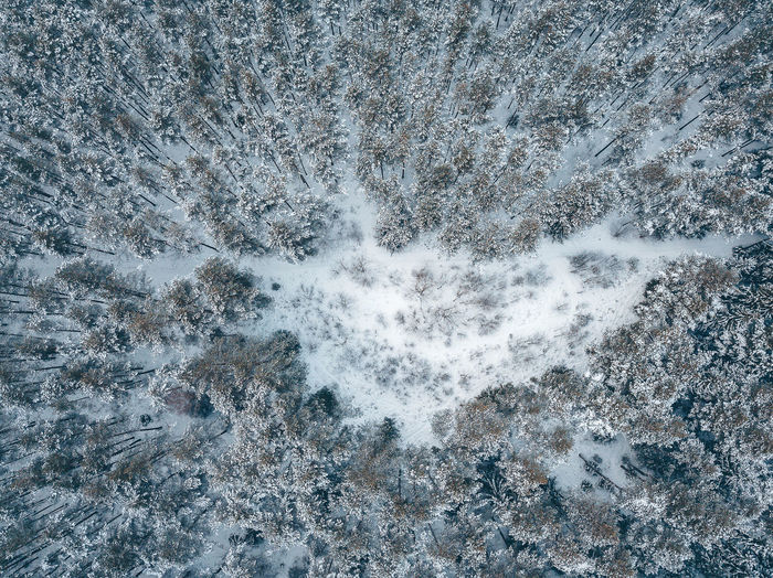 Directly above shot of snow covered forest