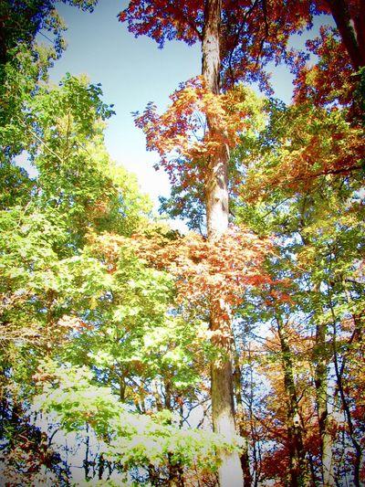 Autumn Trees in