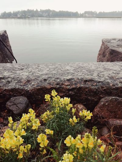 Water Nature Tranquility Beauty In Nature Fog No People Day Plant Tranquil Scene Outdoors Misty Day Finland Seaside By The Sea Autumn Beauty In Nature Mist Sea Rainy Day Yellow Flowers Wild Flowers