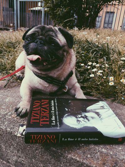 Tiziano Terzani & Raimondo 🙏💕 Book Reading Pug Pug Life  Dogs Park Relaxing Tiziano Terzani My Hero The Meaning Of Life