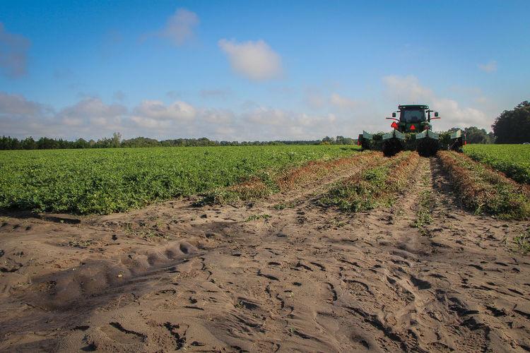 Agriculture Agriculture Crop  Cultivated Farm Farm Equipment Field Peanut Peanuts Plant Rural Scene
