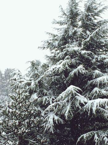Winter Würselen Schnee