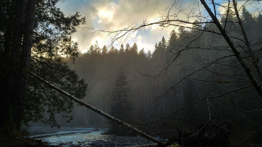 Bare Tree Beauty In Nature Cloud Cloud - Sky Cloudy Day Growth Sky Tranquil Scene Tranquility Tree Weather River View Elwha Valley Elwha Dam Removal Elwha On A Hike Fine Art Photography Showcase July Hidden Gems