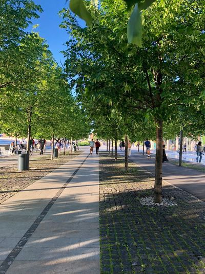 Moscow Muzeon Path Treelined City Diminishing Perspective Direction Footpath Group Of People Moscow Life Muzeonpark Nature Outdoors Park Park - Man Made Space Pathway Paving Stone Plant Real People Road Street Sunlight The Way Forward Tree Walking The Great Outdoors - 2018 EyeEm Awards