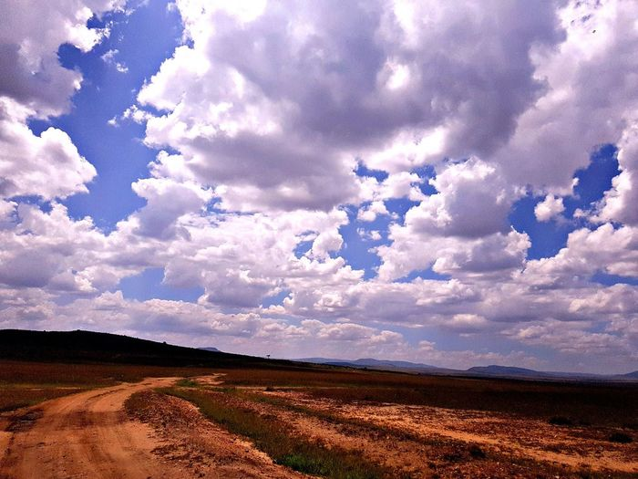 in search for wild life Kenya Game Drive Cloud - Sky Wild Life Sekenani Camp Masai Mara Lonely Path Agriculture Field No People