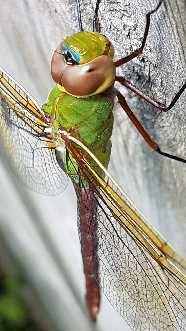 close-up, animal themes, insect, day, green color, no people, outdoors, animal wildlife, one animal, nature, animals in the wild