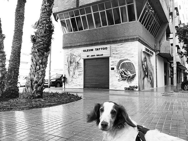Nice Streetart on a tattoo parlour and my silly looking Brittanyspaniel Hada Building Architecture Blackandwhitephotography Blackandwhite Bnw Bnw_maniac Bnw_life Bnw_lover Mono Monochrome Rescuedogs Brittanyspanielsofinsta Rescuedog