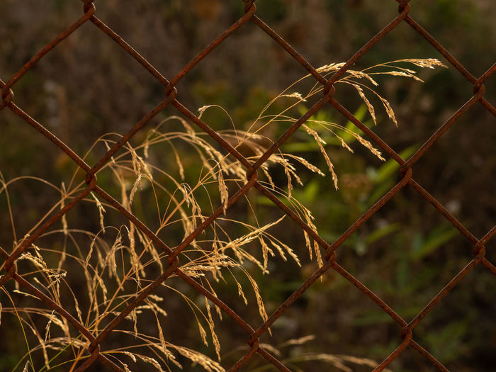 Barrier Boundary Chainlink Fence Close-up Day Fence Focus On Foreground Full Frame Metal Nature No People Outdoors Pattern Plant Protection Safety Security Selective Focus Sharp Wire