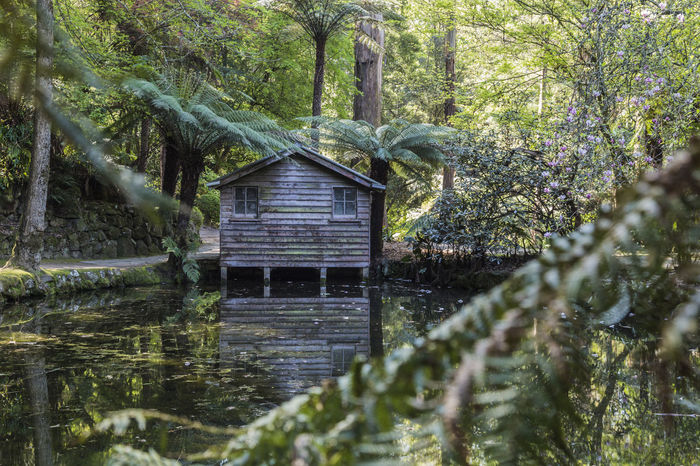 Alfred Nicholas Gardens Green Color Growth Leaves Lush Foliage Nature Pond Tranquility Water Wood - Material