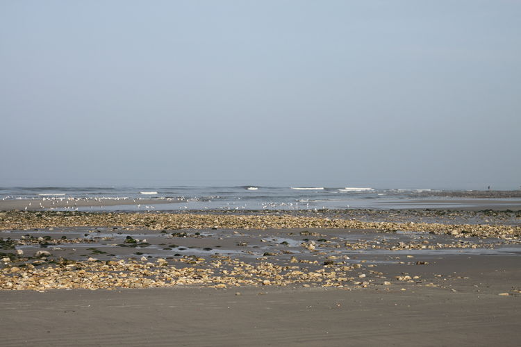 Côte D'Opale France Pas De Calais Rock Seaweed Beach Beauty In Nature Day Horizon Horizon Over Water Idyllic Motion Nature No People Sand Scenics - Nature Sea Sky Tranquility Water