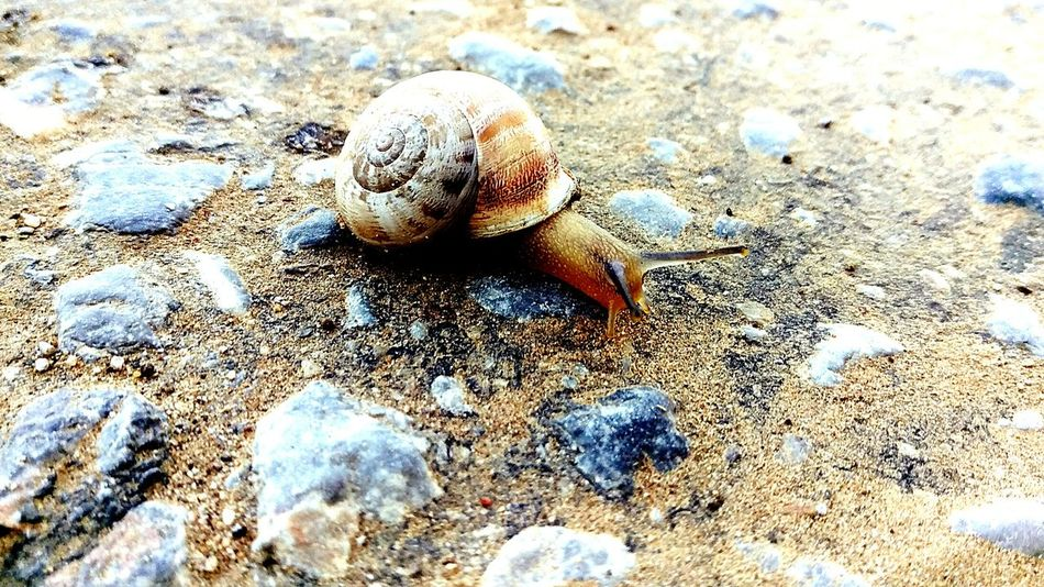 Salyangoz Snail Snail🐌