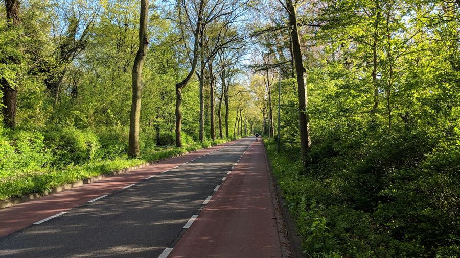 Forest Road Tree Road Sky Green Color Woods Diminishing Perspective vanishing point Empty Road The Way Forward Country Road Asphalt Treelined Countryside Lush - Description Pathway