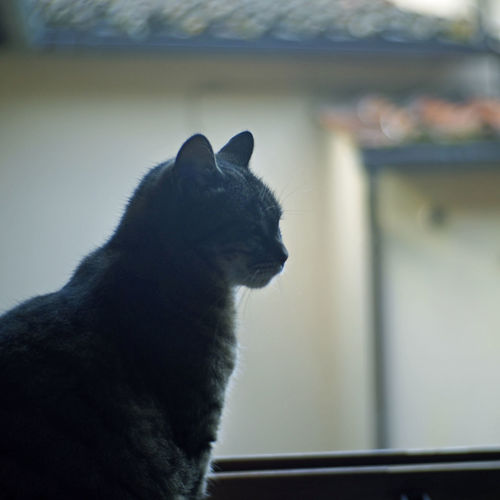 Animal Animal Themes Cat Close-up Domestic Domestic Animals Domestic Cat Feline Focus On Foreground Indoors  Looking Looking Away Mammal No People One Animal Pets Profile View Side View Sitting Vertebrate Whisker Window
