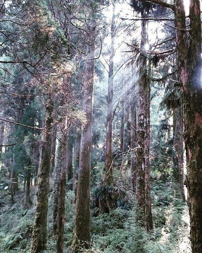 跟著那到光走🌌 斜陽 迷路 漫步 深 森林浴 芬多精 小憩 時光 🌴🌲🌳手機隨拍 帶著鏡頭趴趴照 陽光 森林公園 森林 森呼吸 清新 寧靜