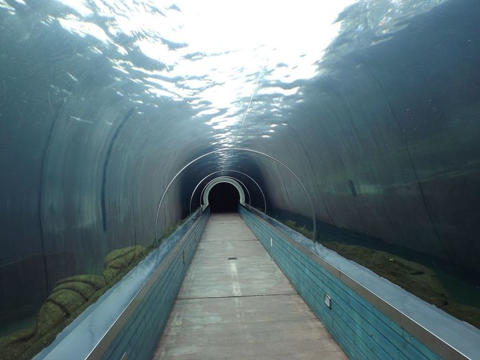Water tunnel at colchester zoo