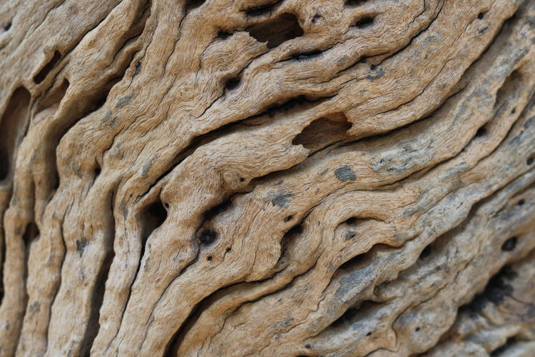 Full Frame Close-up No People Textured  Backgrounds Pattern Brown Wood - Material Tree Plant Bark Tree Trunk Food And Drink Rough Day Focus On Foreground Natural Pattern Outdoors Trunk Nature Aged Aging