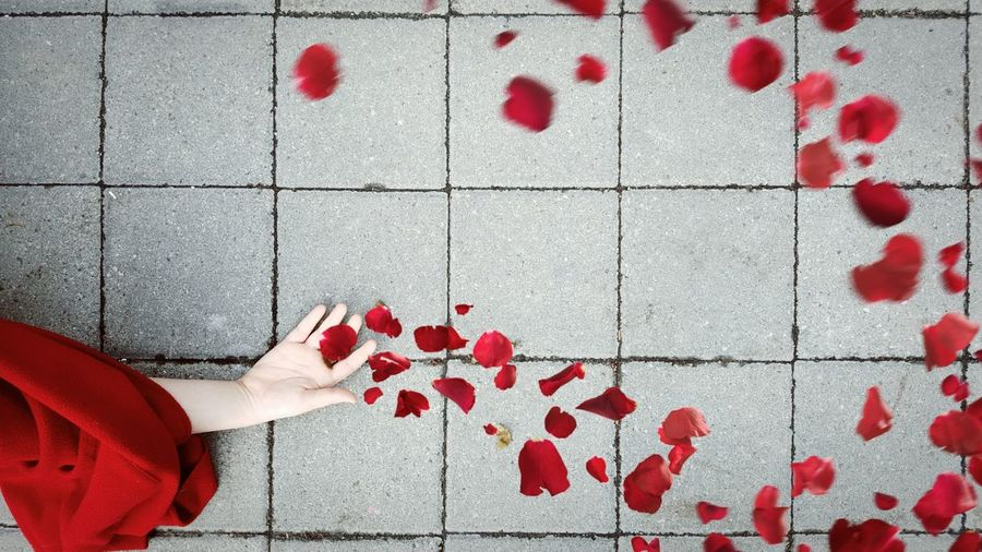 Cropped hand of woman catching red rose petals falling on footpath
