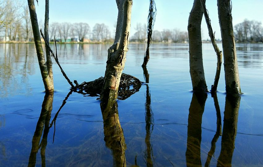 Water Lake Reflection Tree No People Nature Outdoors Day Tree Trunk Sky Beauty In Nature Xiaomiphotography Spring Spring Is Coming  Beauty In Nature Tree Branch EyeEmNewHere First Eyeem Photo Backgrounds Freshness Growth Nature Symmetry