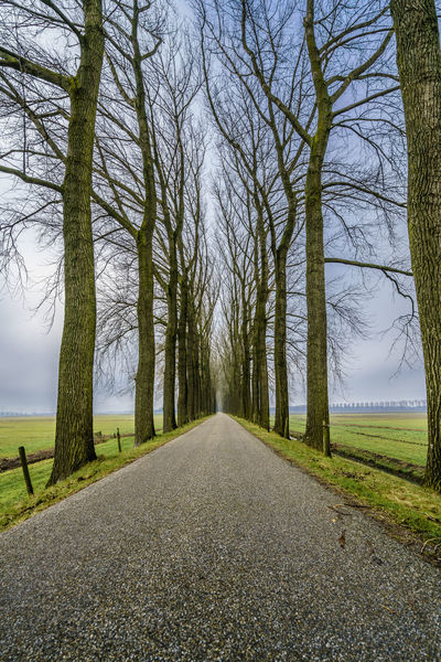 Endless road between an avenue of bare trees during the winter on a dike in dutch farmland. Beauty In Nature Conceptual Photography  Day Dike Endless Freedom Holland Horizon Landscape Lane Nature Netherlands Nature No People Outdoors Perspective Perspective Photography Road Roadtrip Scenics Season  Spooky Atmosphere Spooky Trees Tranquility Tree Winter Miles Away