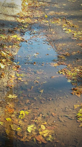 Flaque D'eau Water Reflection No People Wet Autumn Leaves Outdoors Nature Close-up