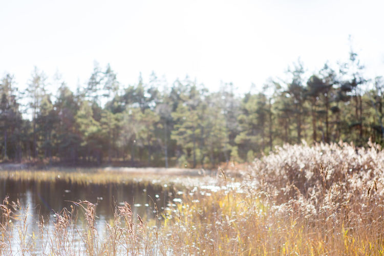 Autumn Backlight Beauty In Nature Day Forest Lake Nature No People Outdoors Sweden Water