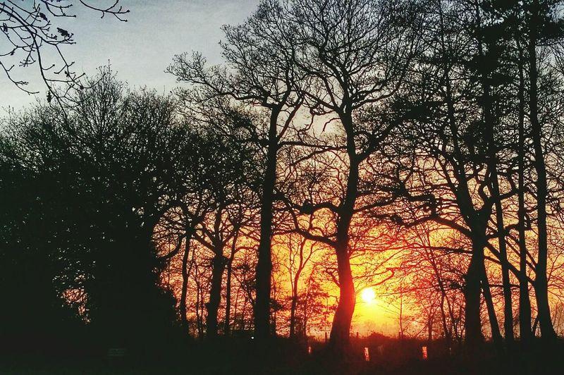 Lightandshadow Silhouette Sun_collection Sunset