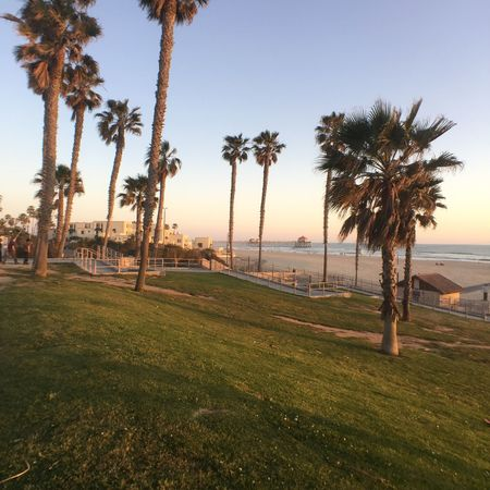 Huntington Beach California Coastal Palm Tree Tree Outdoors Green Color Nature Scenics Sunset