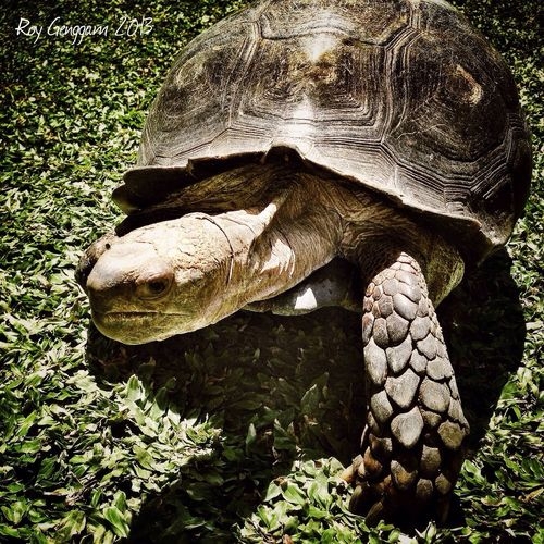 Reptiles Animals Pets IPhoneography