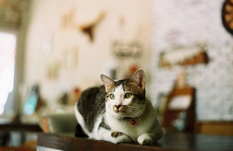 Film Investing In Quality Of Life Animal Themes Close-up Day Domestic Animals Domestic Cat Feline Film Photography Focus On Foreground Indoors  Looking At Camera Mammal No People One Animal Pets Portrait Sitting