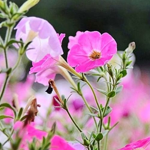 Flowers Summer Park цветы Macro лето влксм парк