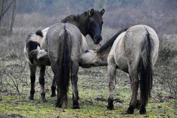 Full Length Of A Donkey Family