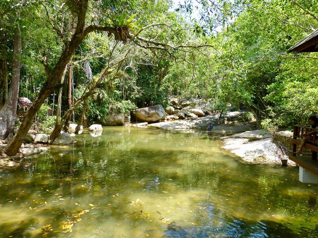 tropical forest and river in Thailand Thailand Tropical Forest Beauty In Nature Connection Day Environment Forest Growth Ko Samui Thailand Land Landscape Nature No People Outdoors Plant Reflection River Rocks And Water Scenics - Nature Tranquil Scene Tranquility Tree Tropical Climate Water Wilderness