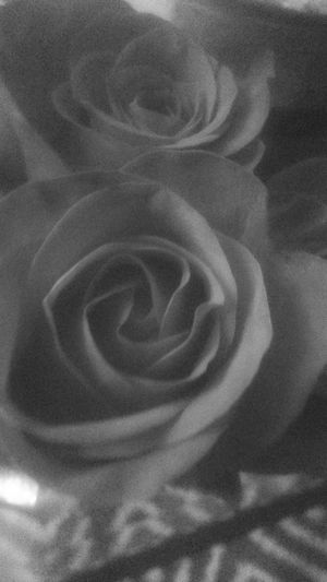 Bnw_flowers Bnw_friday_eyeemchallenge Flowers Flores Blanco Y Negro Bnw_collection NEM Black&white Nem Nature In Between The Flowers~entre Las Flores Roses Rosas Flower Fragility Close-up Nature Beauty In Nature Flower Head Freshness