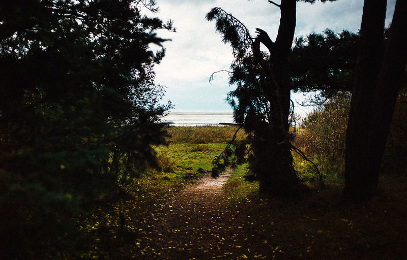35mm Beach Beauty In Nature Day Growth Horizon Over Water Leica Nature No People Outdoors Scenics Sea Sky Tranquil Scene Tranquility Tree VSCO Water